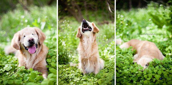 smiley-perro-terapia-ciego2