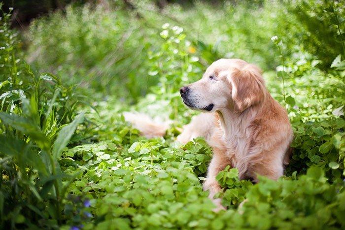 smiley-perro-terapia-ciego5