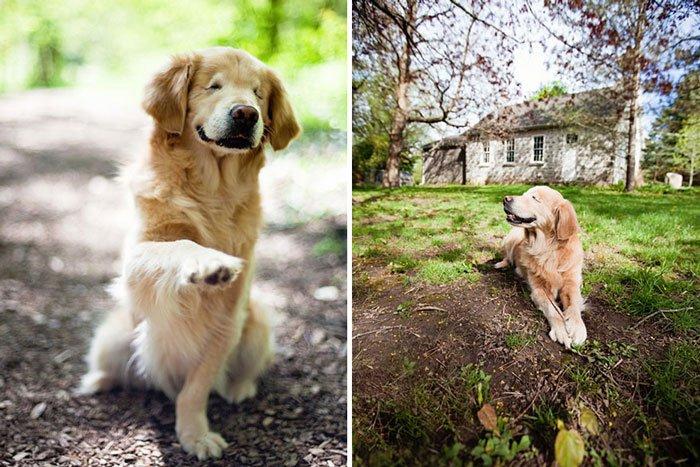 smiley-perro-terapia-ciego6