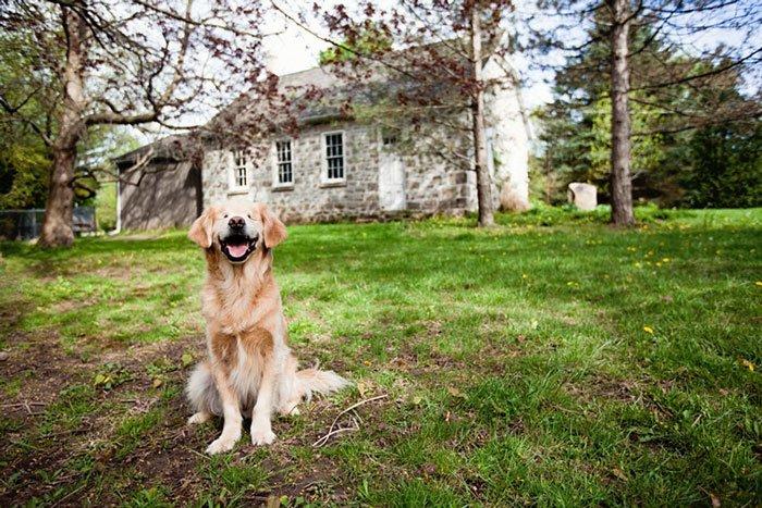 smiley-perro-terapia-ciego7