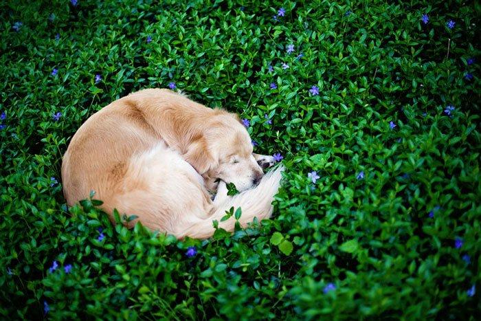 smiley-perro-terapia-ciego8
