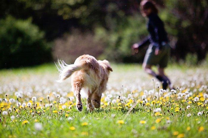 smiley-perro-terapia-ciego9