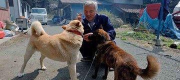 Este hombre volvió a Fukushima para cuidar los animales que otros dejaron atrás.