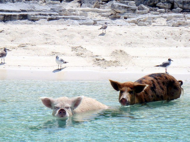 vacaciones-animales6
