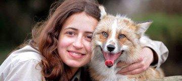 Este hermoso zorro fue rescatado y criado por humanos. Ahora piensa que es un perro.