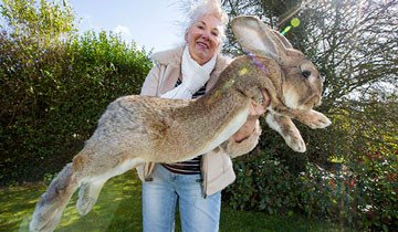 El conejo mas grande del mundo