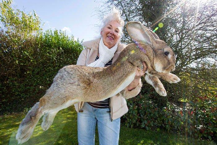 darius-conejo-mas-grande-mundo1
