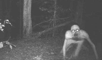 Lo que 14 cazadores capturaron con sus cámaras de fototrampeo te dará pesadillas.
