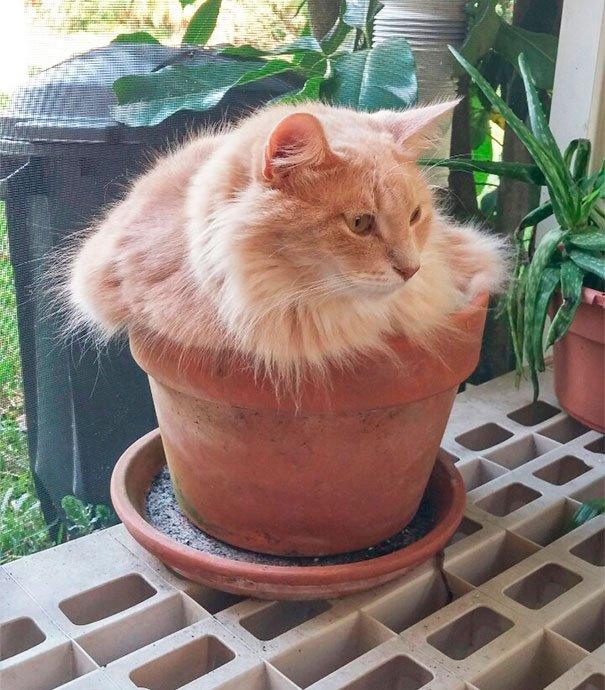 gato-planta-1