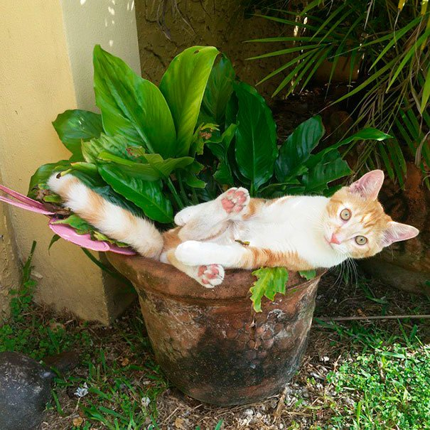 gato-planta-11