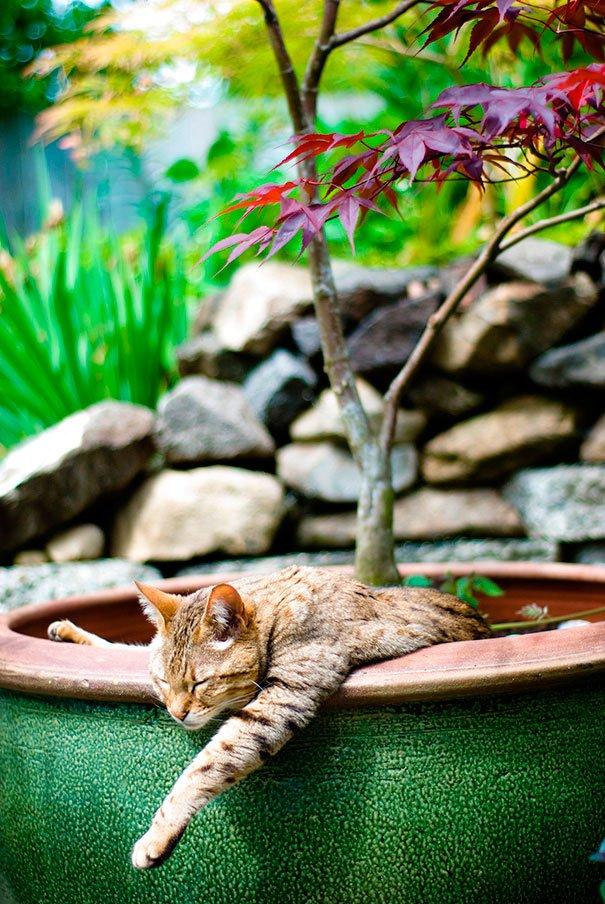 gato-planta-12
