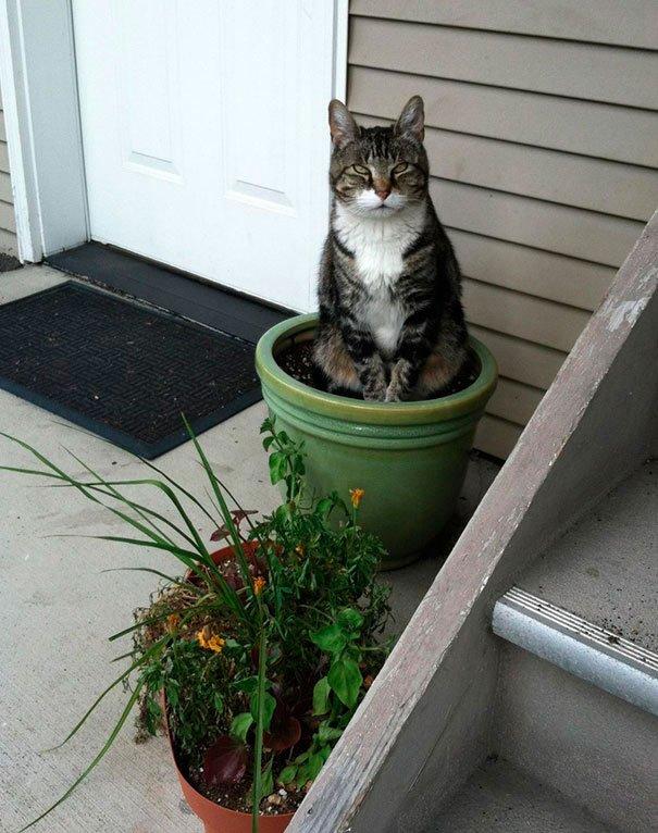 gato-planta-13