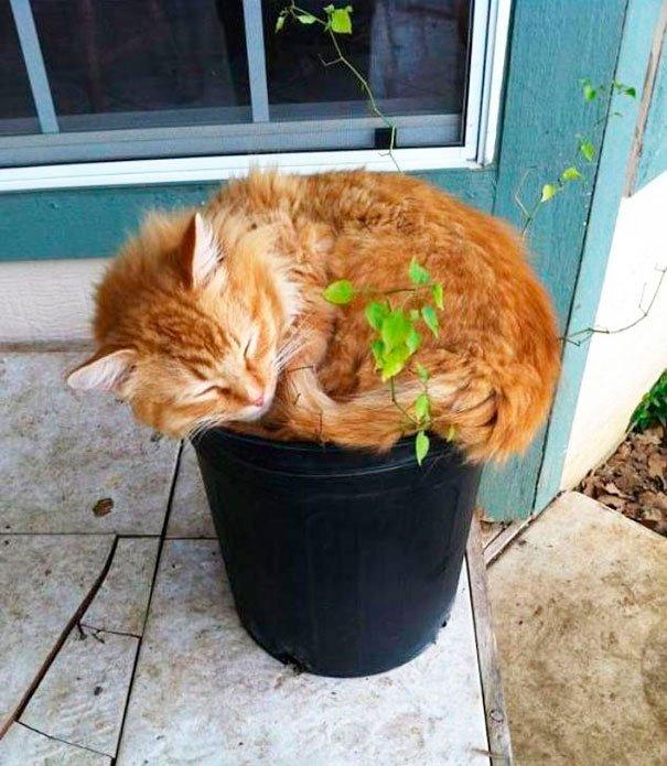 gato-planta-14
