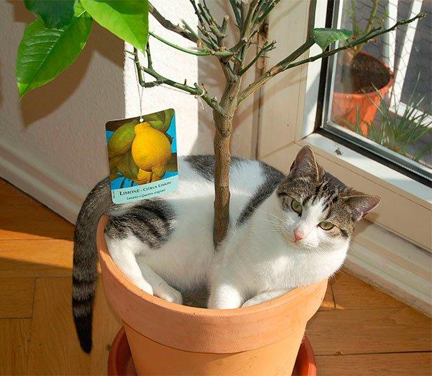 gato-planta-15