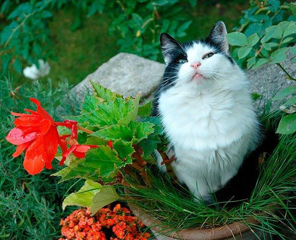 gato-planta-16