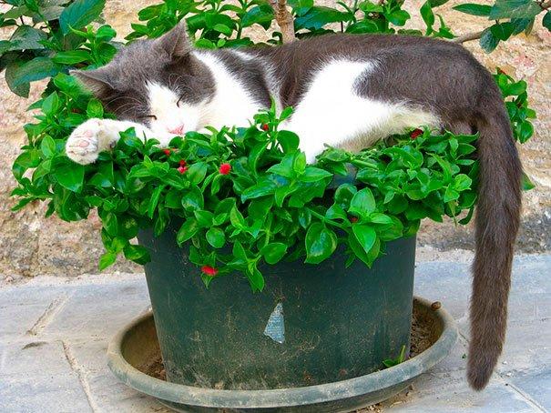 gato-planta-17