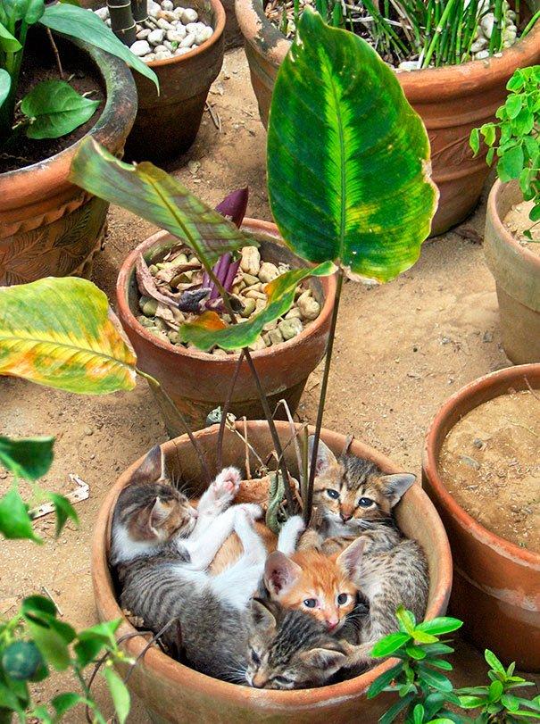 gato-planta-2