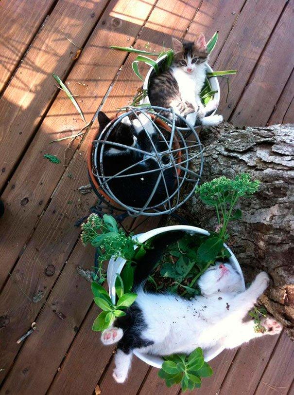 gato-planta-3