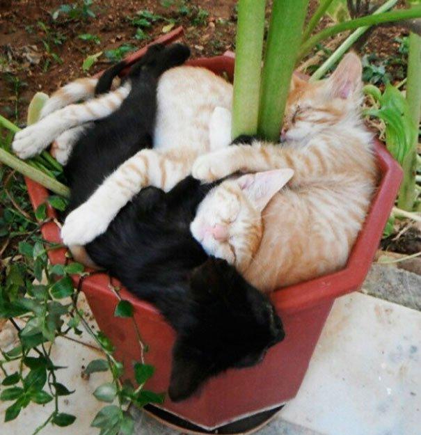 gato-planta-4