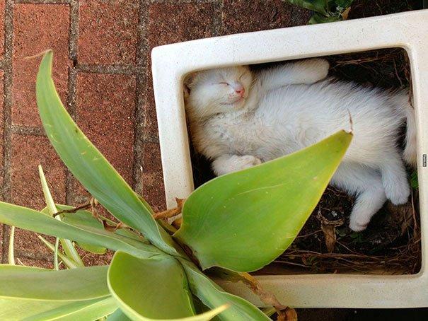 gato-planta-5
