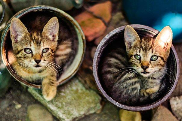gato-planta-7
