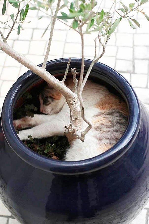 gato-planta-9