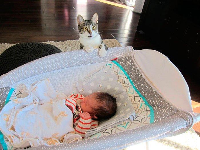 gato-sorpresa-bebe-1