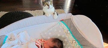 A una pareja se le olvidó decirle a su gato que acababan de tener un bebé.