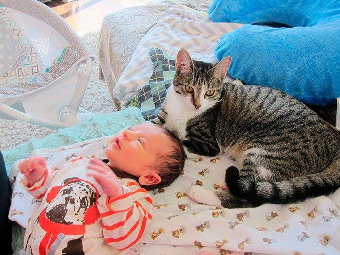 gato-sorpresa-bebe-4