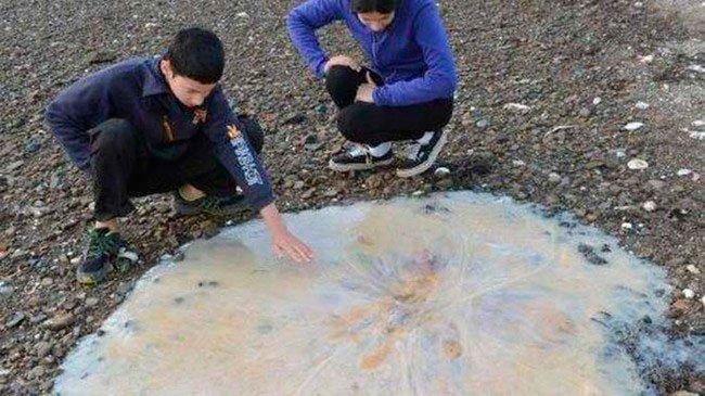 medusa-gigante-1