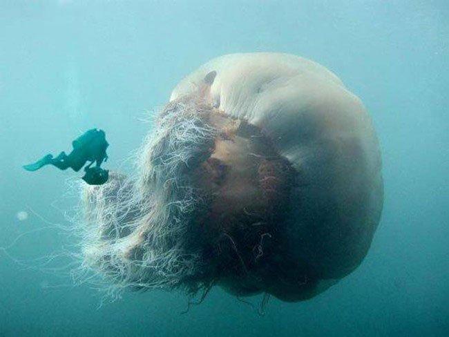 medusa-gigante-3