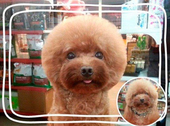 pelo-geometrico-perros-1