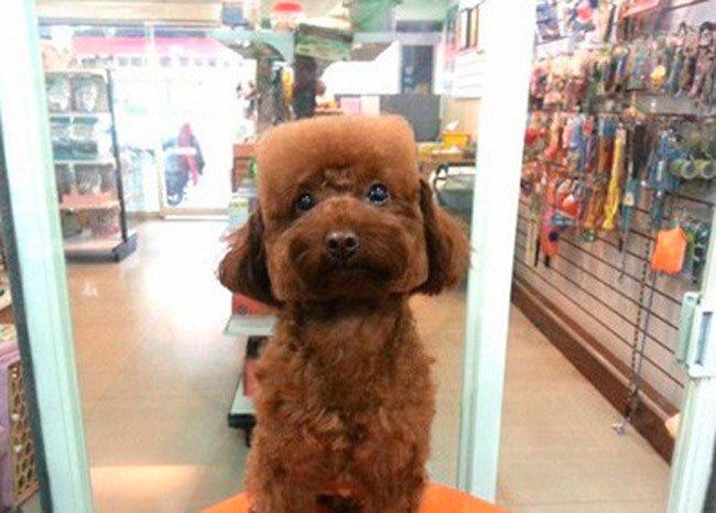 pelo-geometrico-perros-5