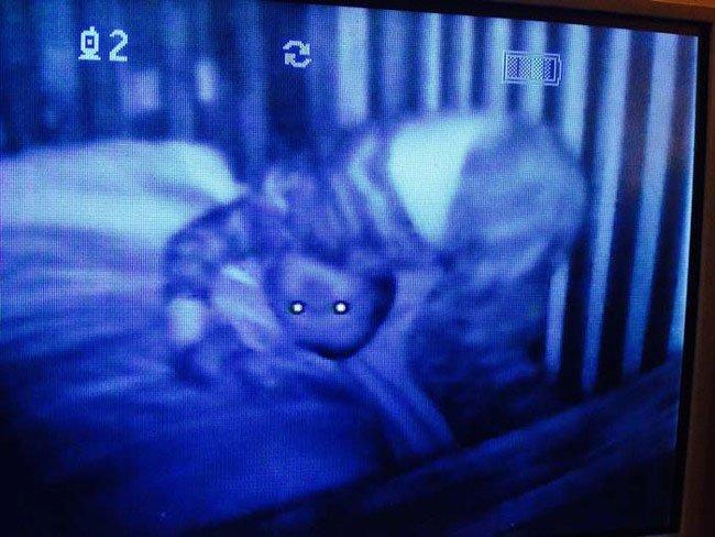 monitores-para-bebes-miedo-9