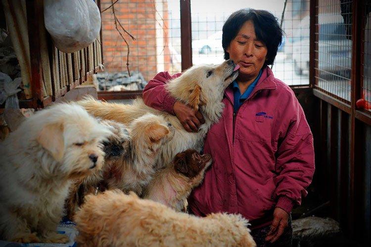 100-perros-salvados-festival-carne-perro-yulin-1