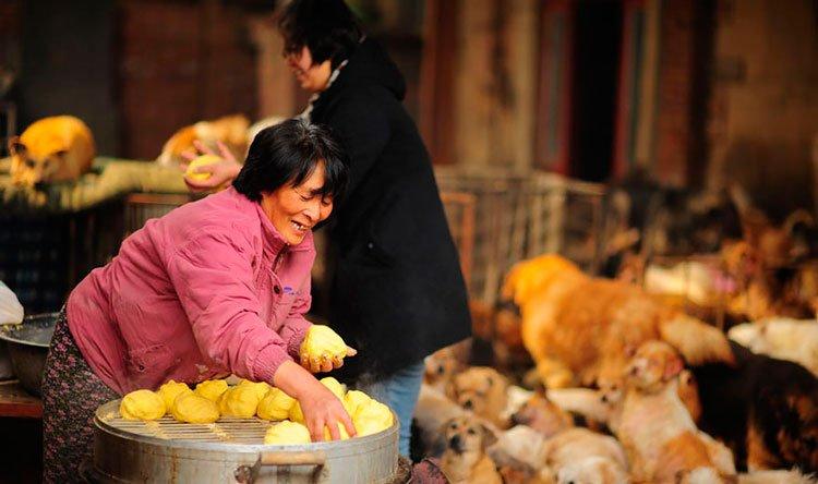 100-perros-salvados-festival-carne-perro-yulin-11
