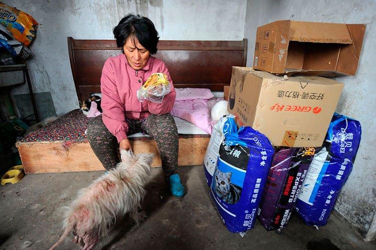 100-perros-salvados-festival-carne-perro-yulin-14