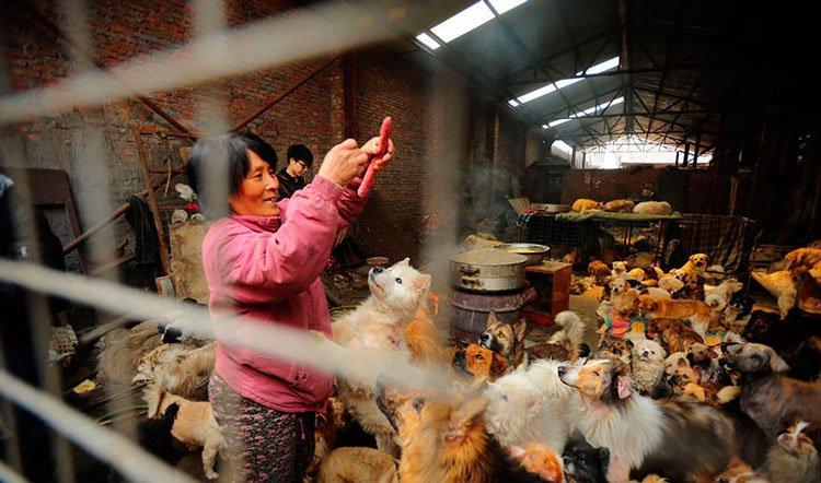 100-perros-salvados-festival-carne-perro-yulin-15