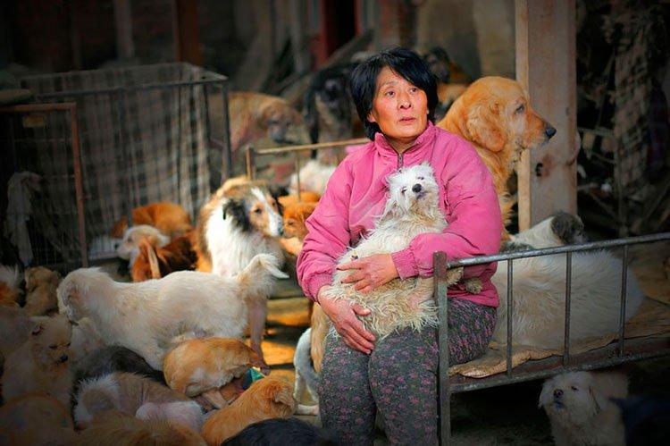 100-perros-salvados-festival-carne-perro-yulin-4