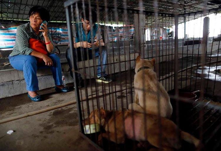 100-perros-salvados-festival-carne-perro-yulin-5