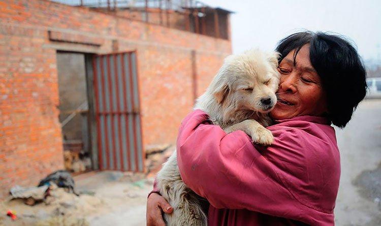 100-perros-salvados-festival-carne-perro-yulin-8