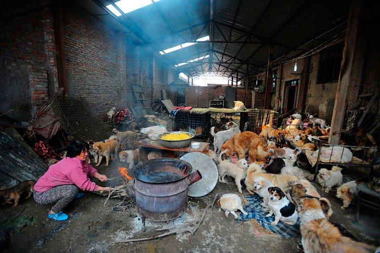 100-perros-salvados-festival-carne-perro-yulin-9