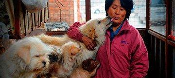Mujer recorre 2400 km y paga 1000 € para salvar 100 perros que iban a ser comidos en un festival chino.