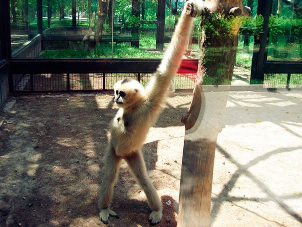 animales-graciosos-posando-4