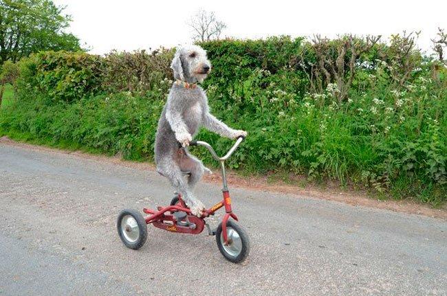 barry-perro-ciclista-1