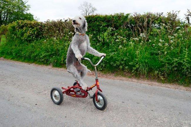 barry-perro-ciclista-2