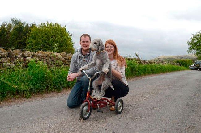 barry-perro-ciclista-3