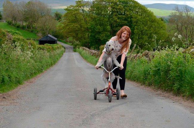 barry-perro-ciclista-5
