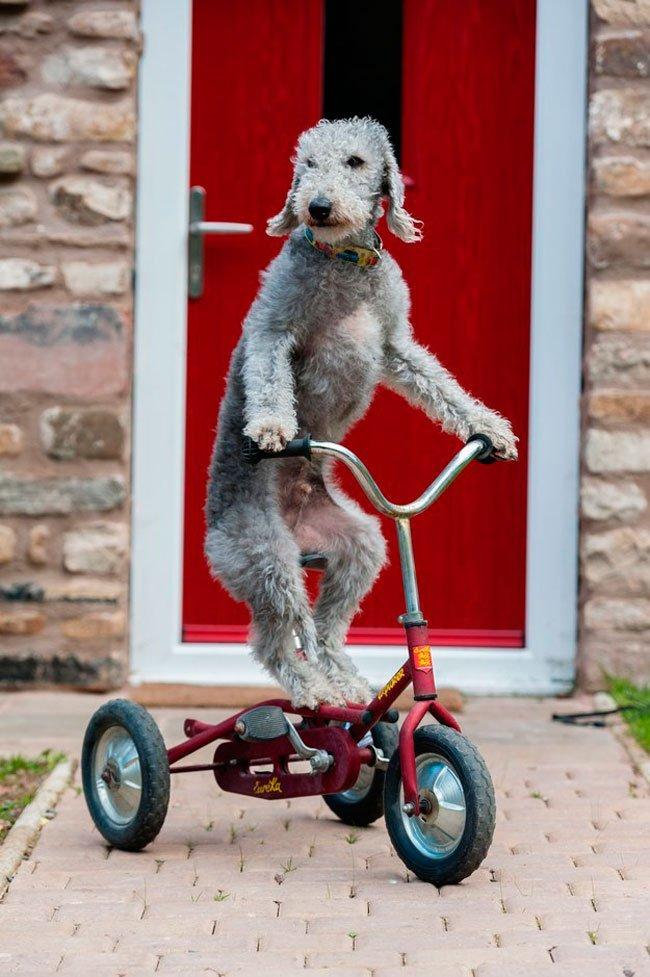 barry-perro-ciclista-6