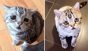 Luhu podría ser el gato más triste que se hayas visto en todo Instagram.